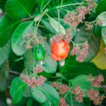 Normes de Base de l'Agriculture Biologique